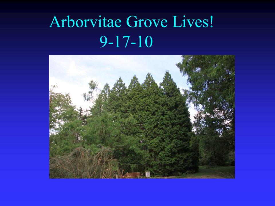 Arborvitae Grove Lives! 9-17-10