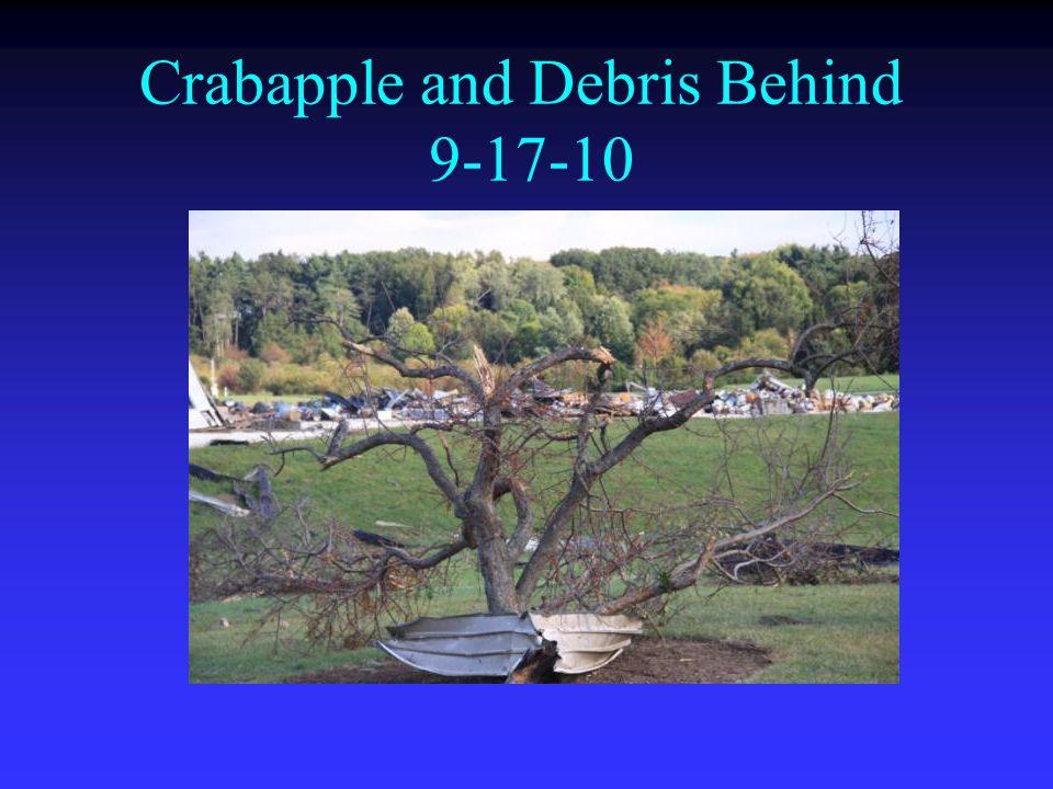 Crabapple and Debris Behind 9-17-10