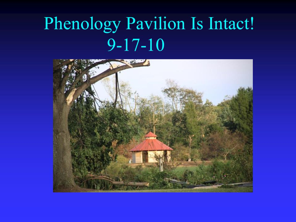 Phenology Pavilion Is Intact! 9-17-10