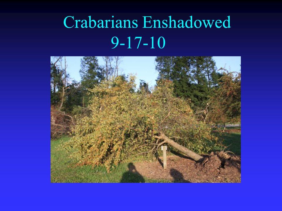 Crabarians Enshadowed 9-17-10