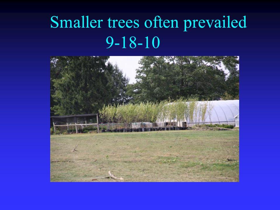 Smaller trees often prevailed 9-18-10
