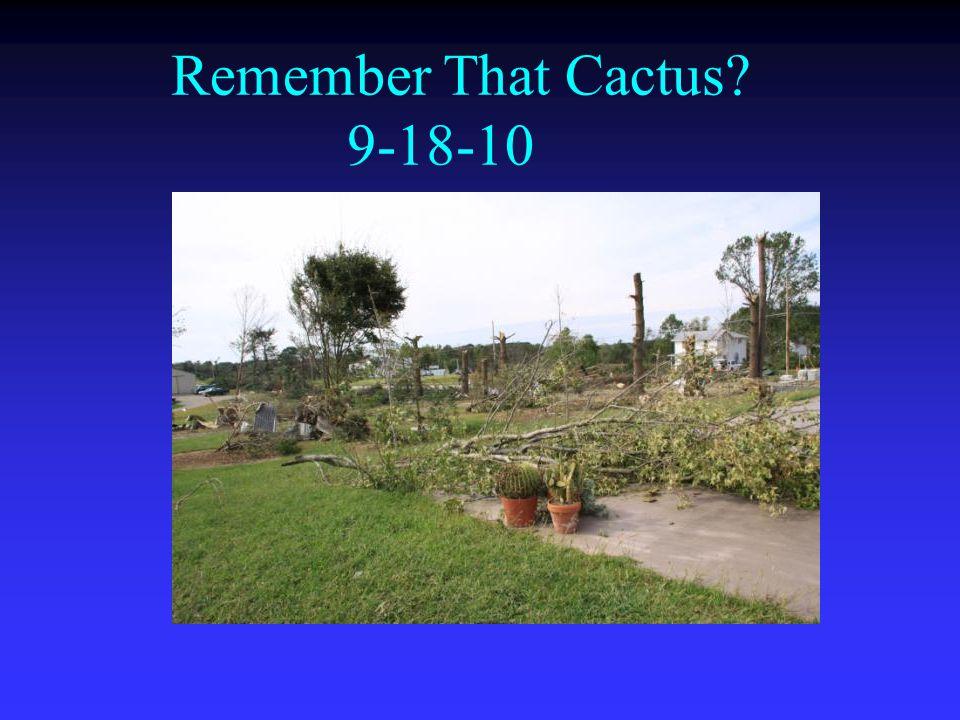 Remember That Cactus? 9-18-10