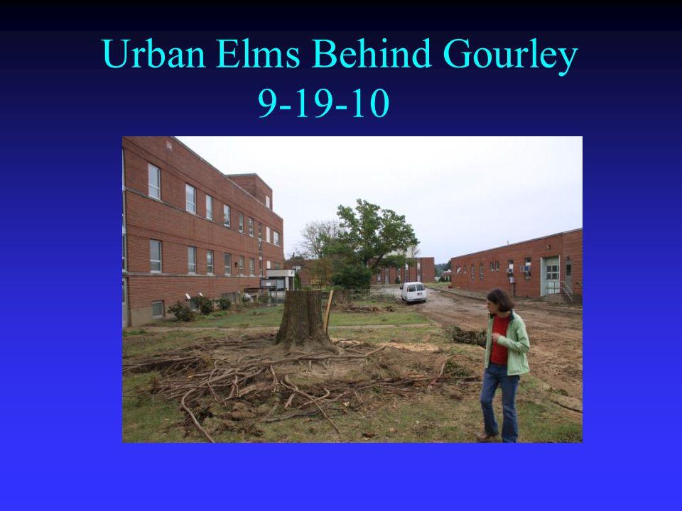 Urban Elms Behind Gourley 9-19-10