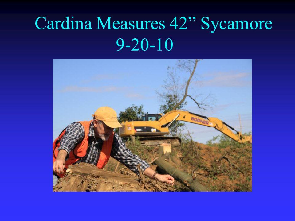 Cardina Measures 42 Sycamore 9-20-10