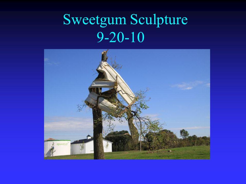 Sweetgum Sculpture 9-20-10