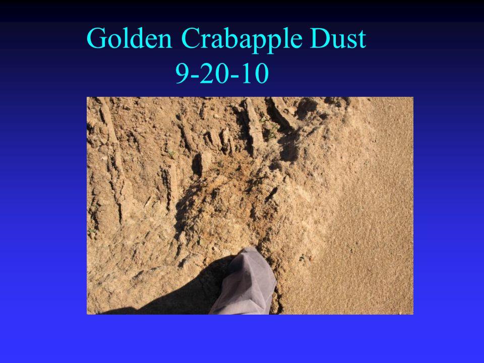 Golden Crabapple Dust 9-20-10