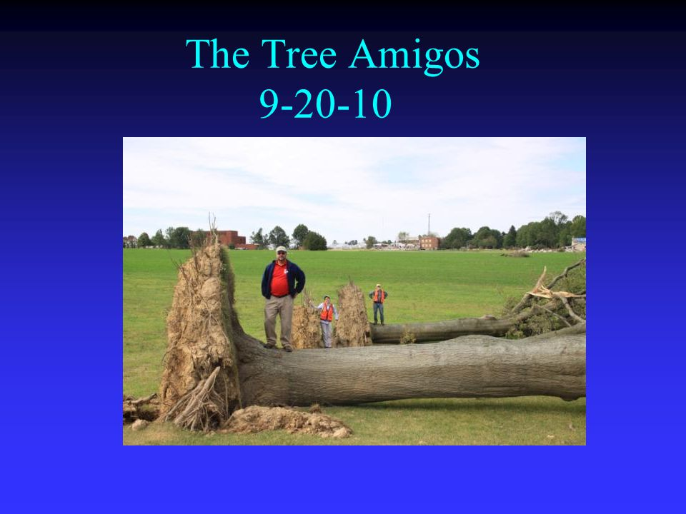 The Tree Amigos 9-20-10