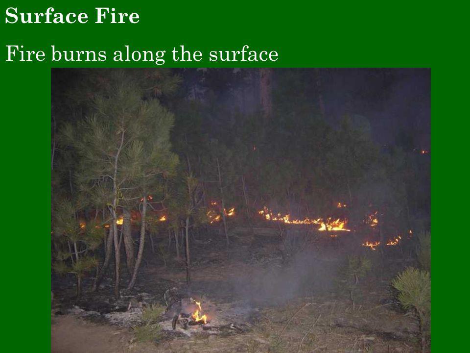 Surface Fire Fire burns along the surface