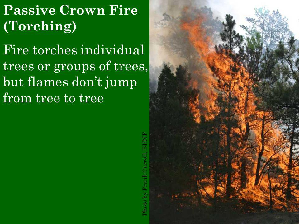 Passive Crown Fire (Torching) Fire torches individual trees or groups of trees, but flames don't jump from tree to tree Photo by Frank Carroll, BHNF