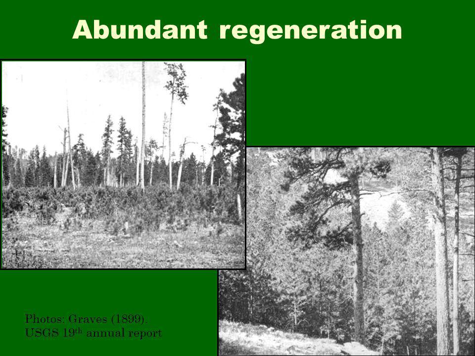 Abundant regeneration Photos: Graves (1899). USGS 19 th annual report