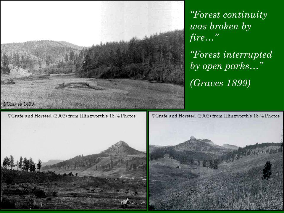 ©Graves 1899 ©Grafe and Horsted (2002) from Illingworth's 1874 Photos Forest continuity was broken by fire… Forest interrupted by open parks… (Graves 1899)