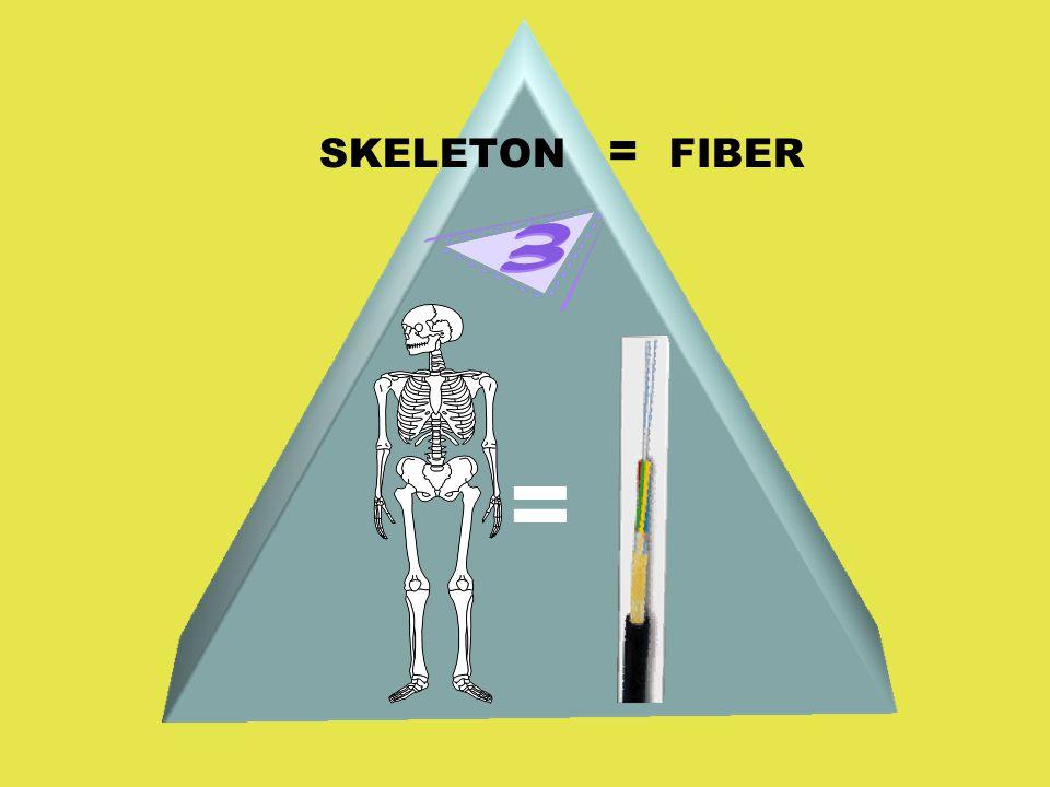 SKELETON = FIBER =