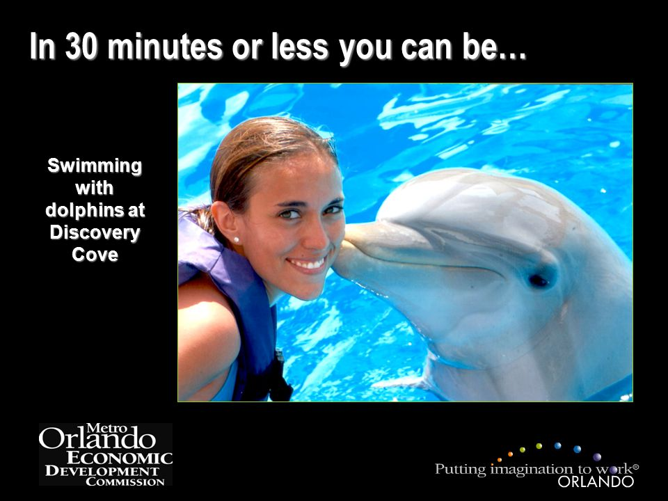 In 30 minutes or less you can be… Swimming with dolphins at Discovery Cove