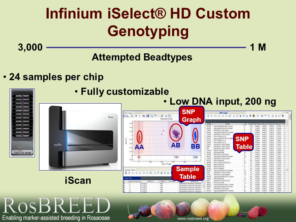 Infinium iSelect® HD Custom Genotyping 3,0001 M Attempted Beadtypes 24 samples per chip Sample Table SNP Table SNP Graph AA AB BB Fully customizable Low DNA input, 200 ng iScan