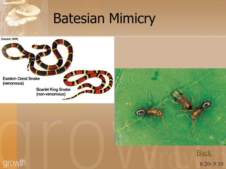 Batesian Mimicry Back 8:20- 9:10