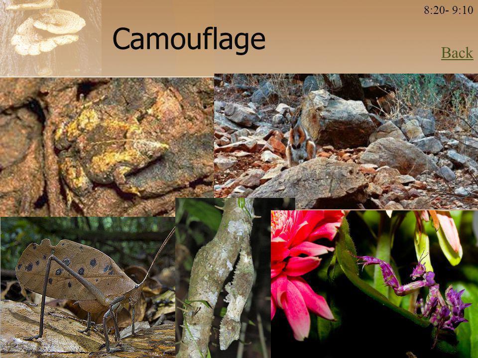 Camouflage Back 8:20- 9:10