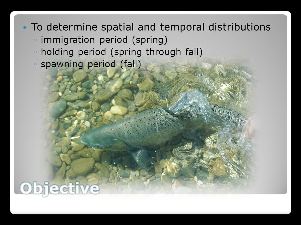 To determine spatial and temporal distributions ◦immigration period (spring) ◦holding period (spring through fall) ◦spawning period (fall)