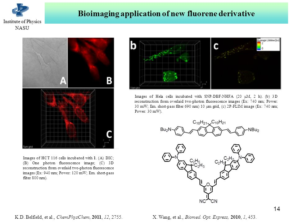 Іnstitute of Physics NASU Bioimaging application of new fluorene derivative Images of HCT 116 cells incubated with 1.