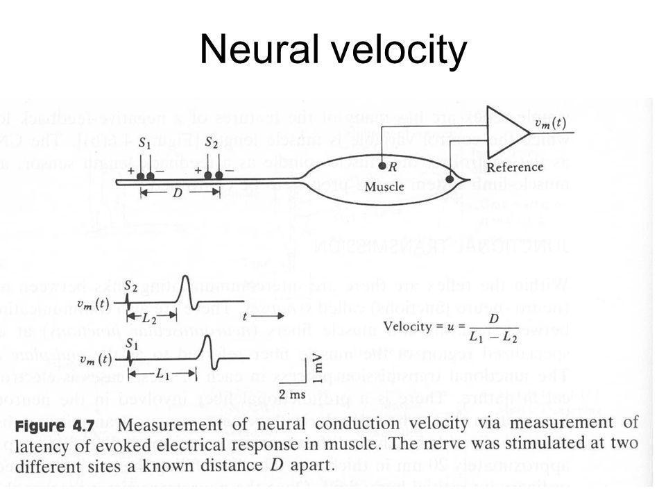 Fysisk institutt - Rikshospitalet10 FYS 4250 Neural velocity