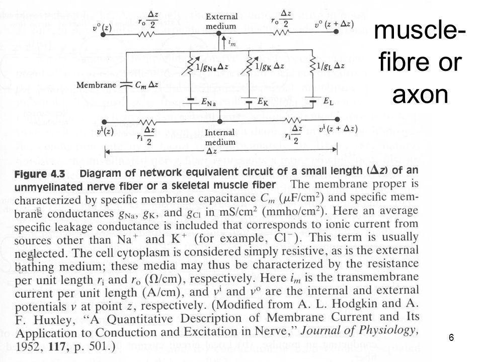 Fysisk institutt - Rikshospitalet6 FYS 4250 muscle- fibre or axon
