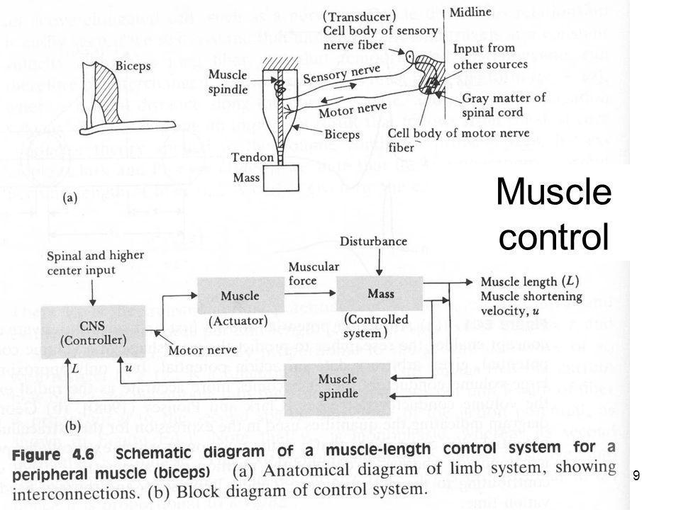 Fysisk institutt - Rikshospitalet9 FYS 4250 Muscle control
