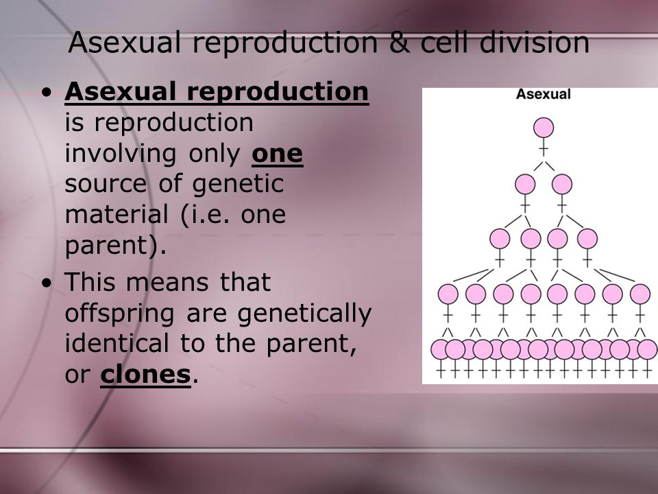 Asexual reproduction & cell division Asexual reproduction is reproduction involving only one source of genetic material (i.e. one parent). This means