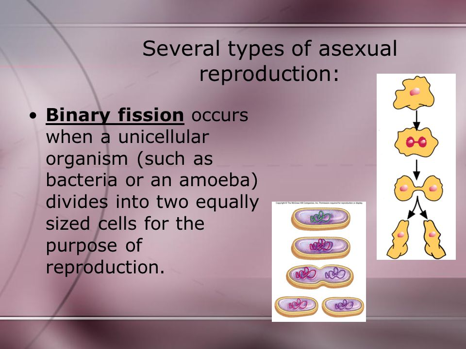Several types of asexual reproduction: Budding occurs when simple organisms (such as yeast or hydra) produce much smaller cells than those of the parent organism.