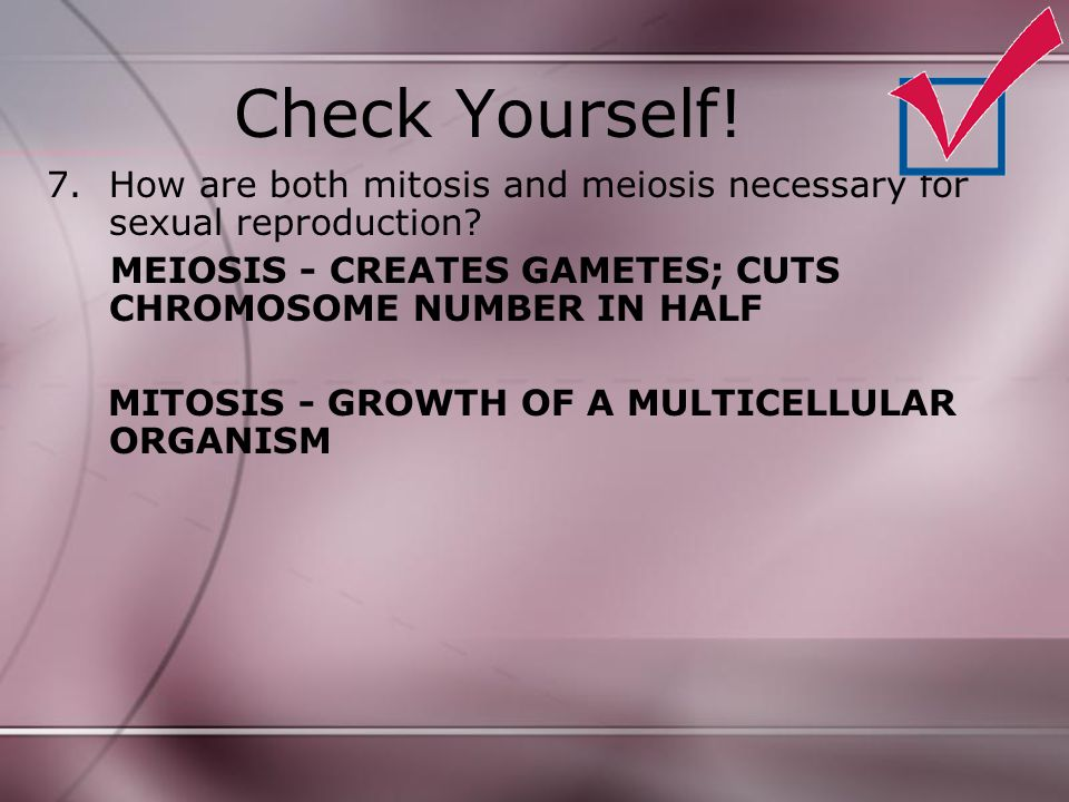 Check Yourself! 7.How are both mitosis and meiosis necessary for sexual reproduction? MEIOSIS - CREATES GAMETES; CUTS CHROMOSOME NUMBER IN HALF MITOSI
