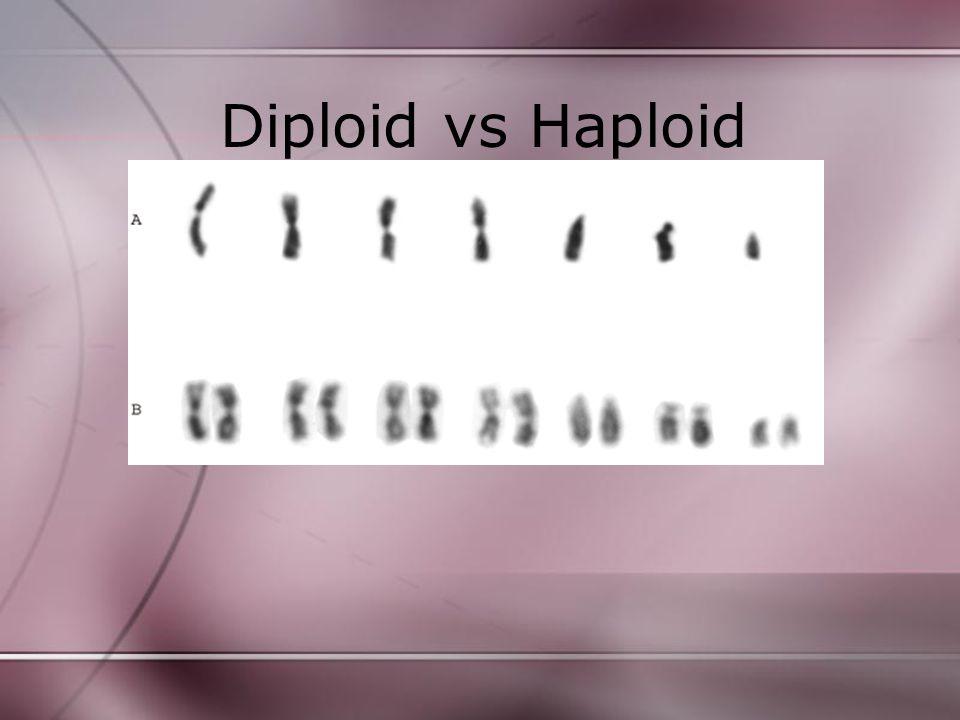 Diploid vs Haploid
