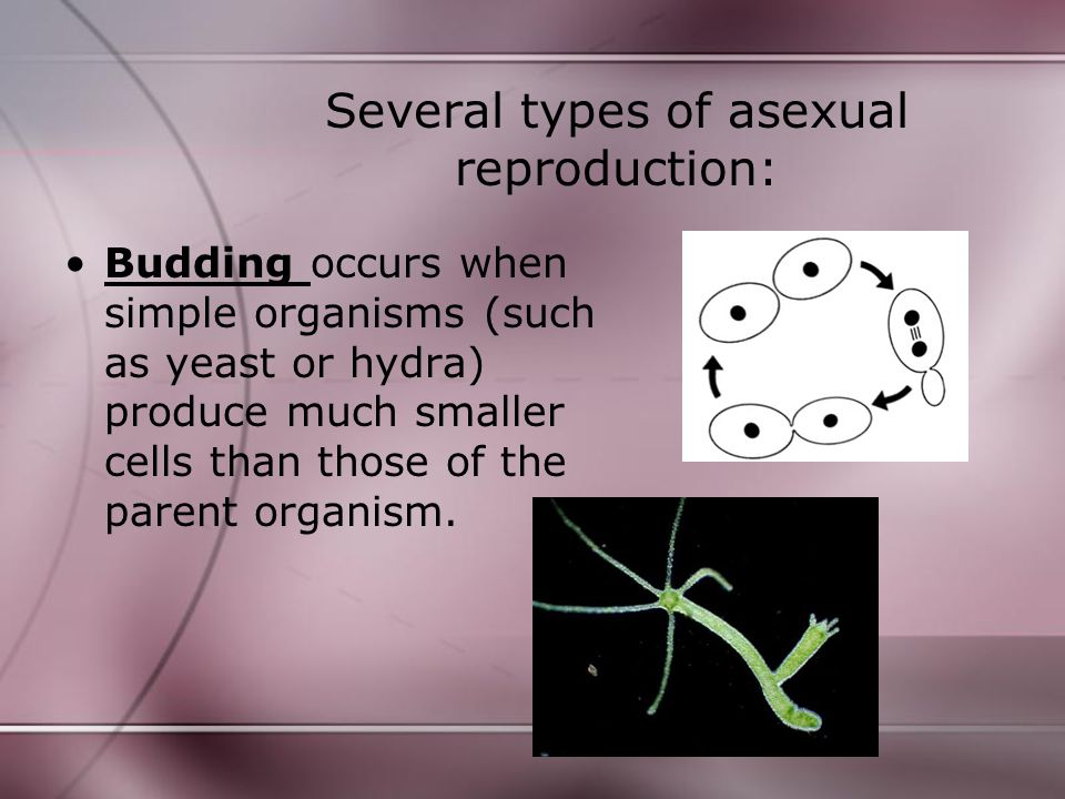 Several types of asexual reproduction: Sporulation occurs when an organism (such as mushrooms) produce spores - tiny packets of DNA - for the purpose of reproduction.