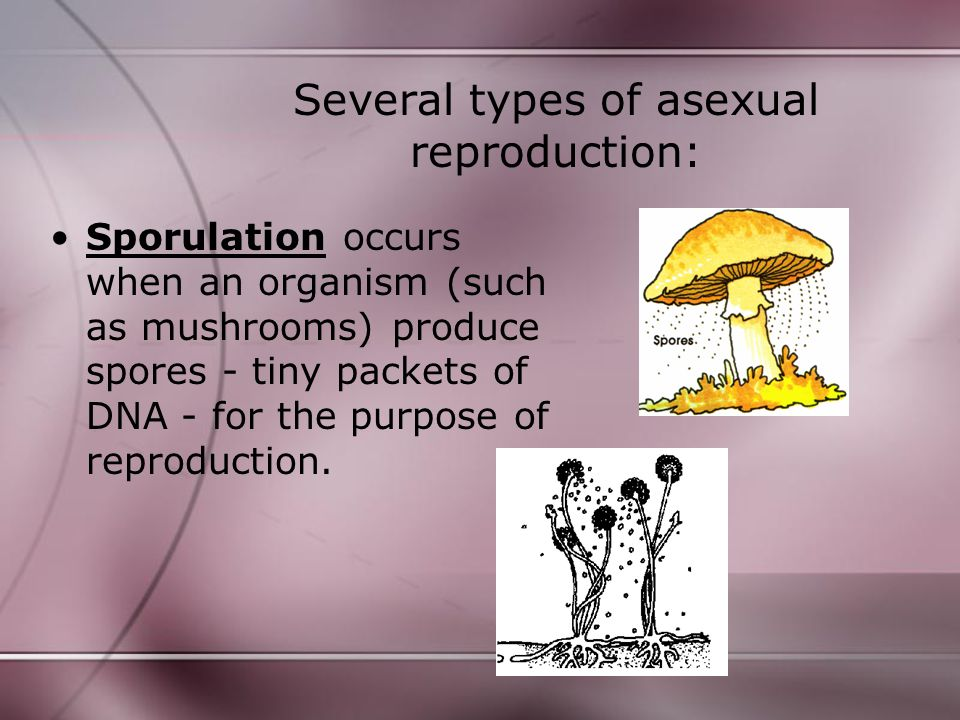 Several types of asexual reproduction: Vegetative propagation occurs when a portion of a plant goes through cell division in order to produce another plant.