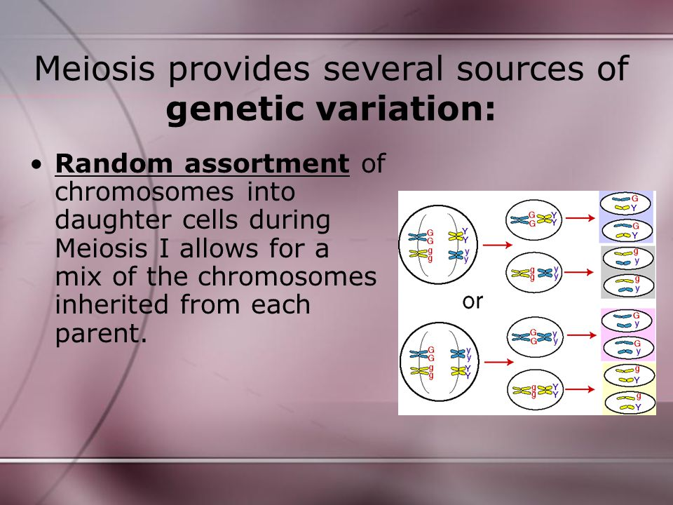 Meiosis provides several sources of genetic variation: Random assortment of chromosomes into daughter cells during Meiosis I allows for a mix of the c