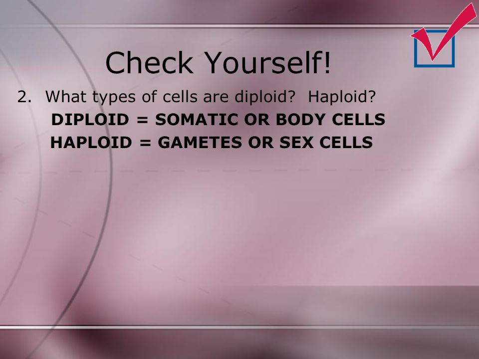 Check Yourself! 2.What types of cells are diploid? Haploid? DIPLOID = SOMATIC OR BODY CELLS HAPLOID = GAMETES OR SEX CELLS