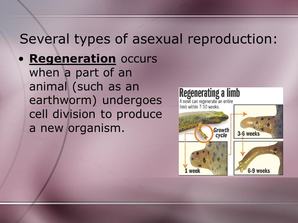 Check Yourself.2. Name five types of asexual reproduction.