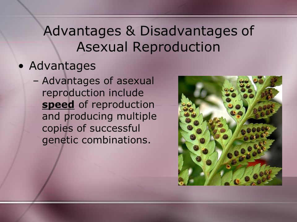 Advantages & Disadvantages of Asexual Reproduction Disadvantages –Disadvantages of asexual reproduction include increased risk of a single factor affecting an entire population due to lack of genetic variation