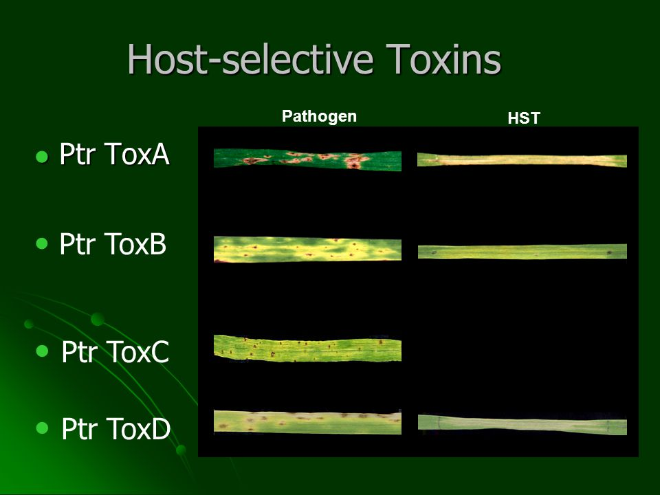 Proteinase K Assay TA PK Insensitive TA PK Sensitive TA