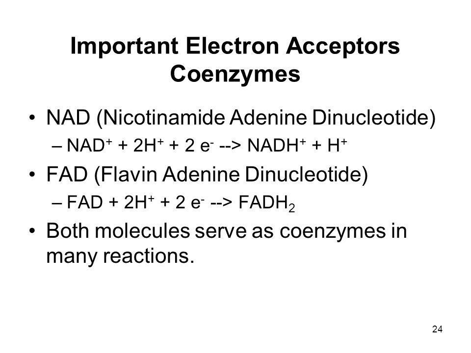 Important Electron Acceptors Coenzymes NAD (Nicotinamide Adenine Dinucleotide) –NAD + + 2H + + 2 e - --> NADH + + H + FAD (Flavin Adenine Dinucleotide) –FAD + 2H + + 2 e - --> FADH 2 Both molecules serve as coenzymes in many reactions.