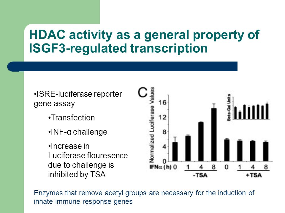 HDAC activity as a general property of ISGF3-regulated transcription ISRE-luciferase reporter gene assay Transfection INF-α challenge Increase in Luciferase flouresence due to challenge is inhibited by TSA Enzymes that remove acetyl groups are necessary for the induction of innate immune response genes