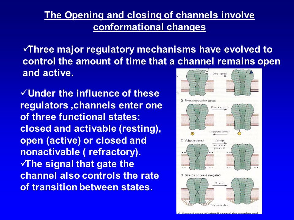 The Opening and closing of channels involve conformational changes Three major regulatory mechanisms have evolved to control the amount of time that a