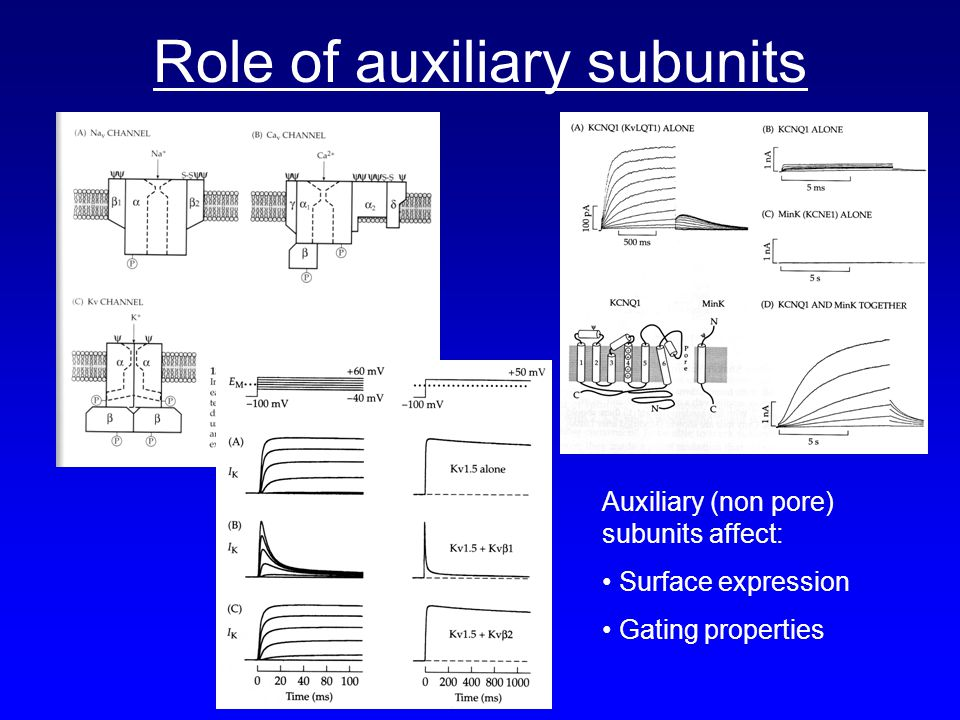 Role of auxiliary subunits Auxiliary (non pore) subunits affect: Surface expression Gating properties