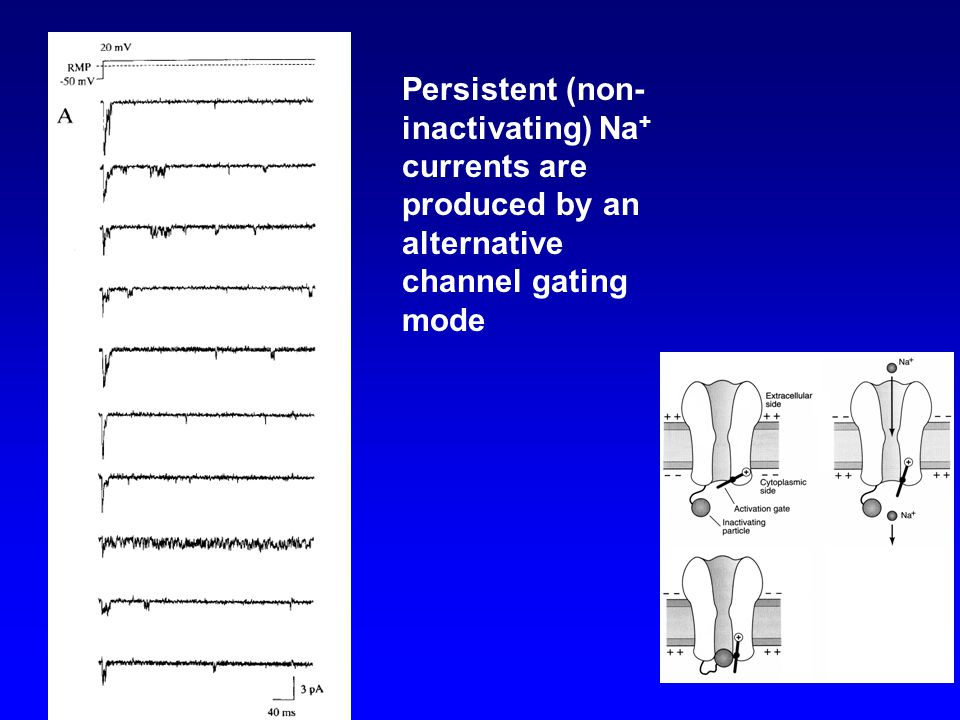 Persistent (non- inactivating) Na + currents are produced by an alternative channel gating mode
