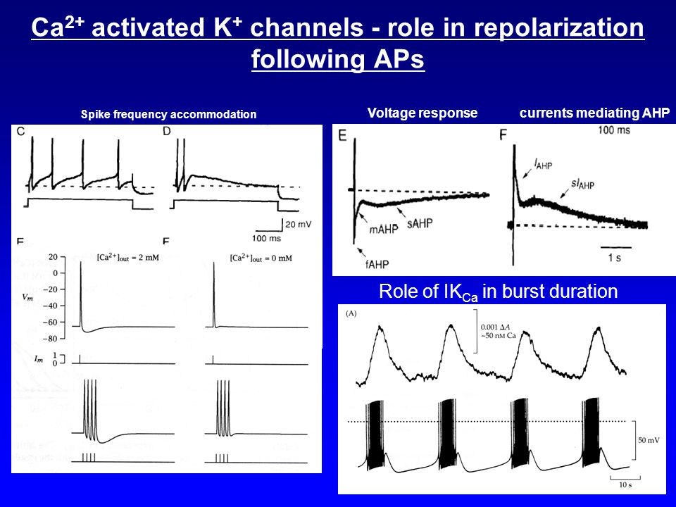 Ca 2+ activated K + channels - role in repolarization following APs Spike frequency accommodation Voltage responsecurrents mediating AHP Role of IK Ca