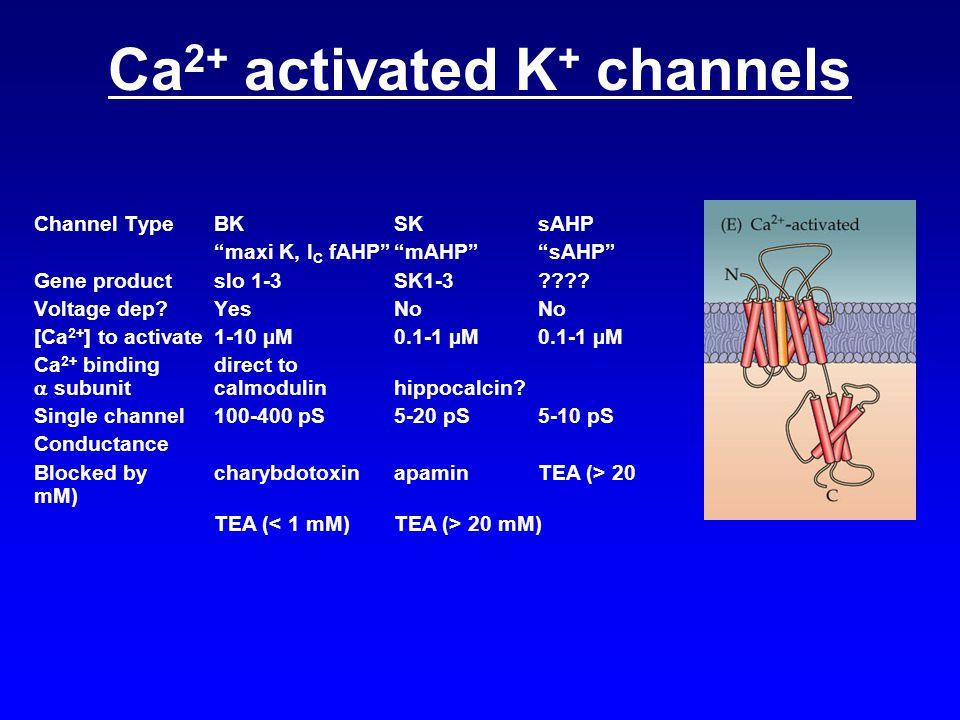 "Ca 2+ activated K + channels Channel TypeBKSKsAHP ""maxi K, I C fAHP""""mAHP""""sAHP"" Gene productslo 1-3SK1-3???? Voltage dep?YesNoNo [Ca 2+ ] to activate"