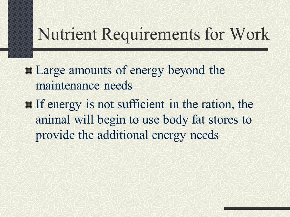 Nutrient Requirements for Work Large amounts of energy beyond the maintenance needs If energy is not sufficient in the ration, the animal will begin to use body fat stores to provide the additional energy needs