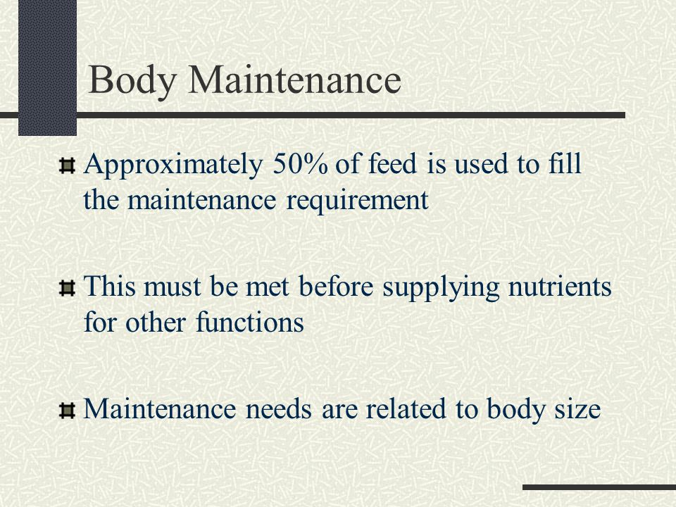 Body Maintenance Approximately 50% of feed is used to fill the maintenance requirement This must be met before supplying nutrients for other functions Maintenance needs are related to body size