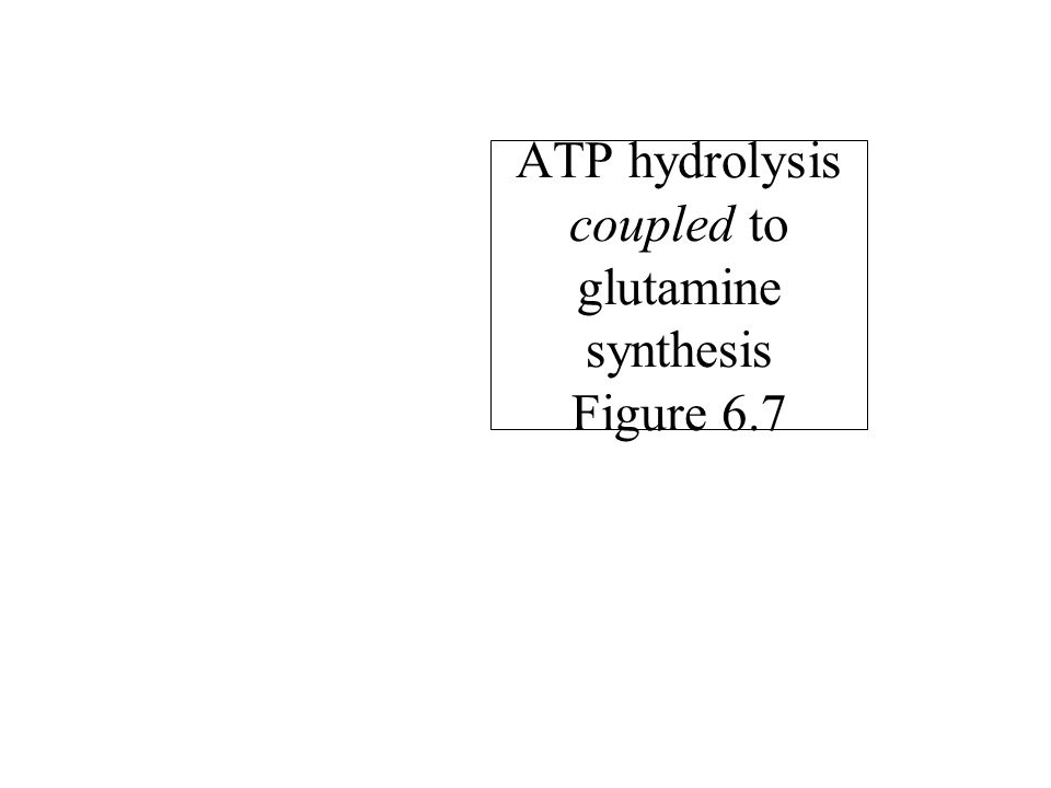 ATP hydrolysis coupled to glutamine synthesis Figure 6.7