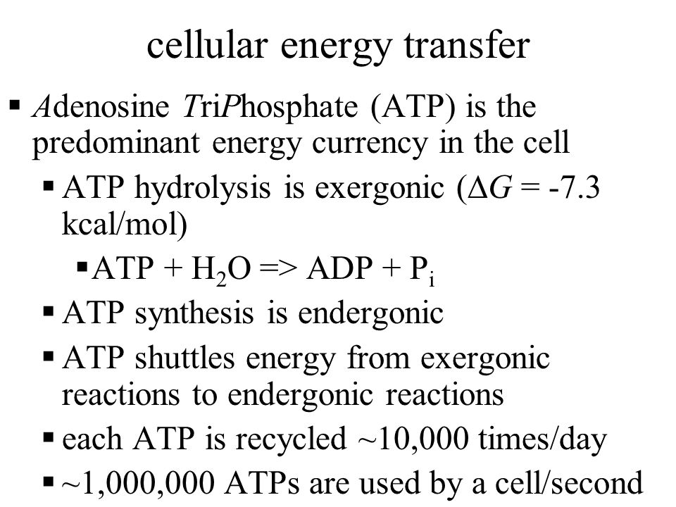 cellular energy transfer  Adenosine TriPhosphate (ATP) is the predominant energy currency in the cell  ATP hydrolysis is exergonic (  G = -7.3 kcal/mol)  ATP + H 2 O => ADP + P i  ATP synthesis is endergonic  ATP shuttles energy from exergonic reactions to endergonic reactions  each ATP is recycled ~10,000 times/day  ~1,000,000 ATPs are used by a cell/second