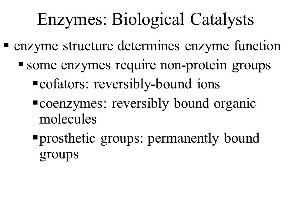 Enzymes: Biological Catalysts  enzyme structure determines enzyme function  some enzymes require non-protein groups  cofators: reversibly-bound ions  coenzymes: reversibly bound organic molecules  prosthetic groups: permanently bound groups