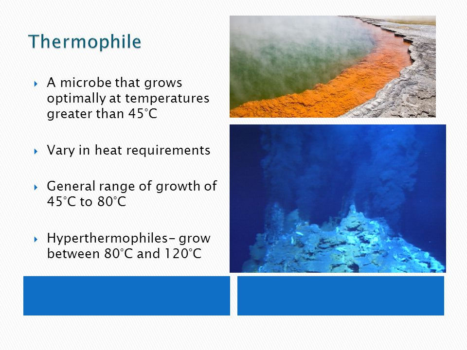  A microbe that grows optimally at temperatures greater than 45°C  Vary in heat requirements  General range of growth of 45°C to 80°C  Hyperthermo