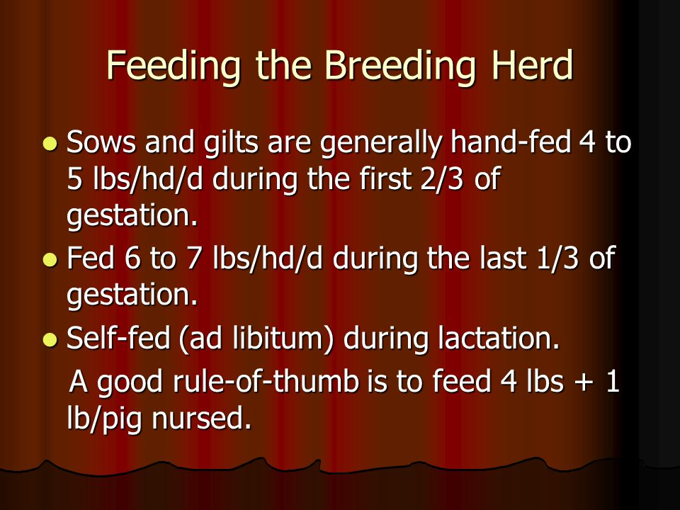 Feeding the Breeding Herd Sows and gilts are generally hand-fed 4 to 5 lbs/hd/d during the first 2/3 of gestation.